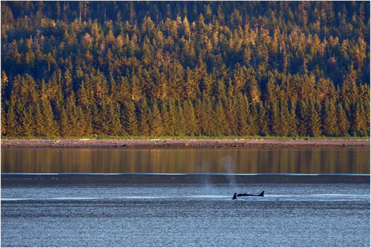 Blackfish is Foolish , Unoriginal, and Misleading