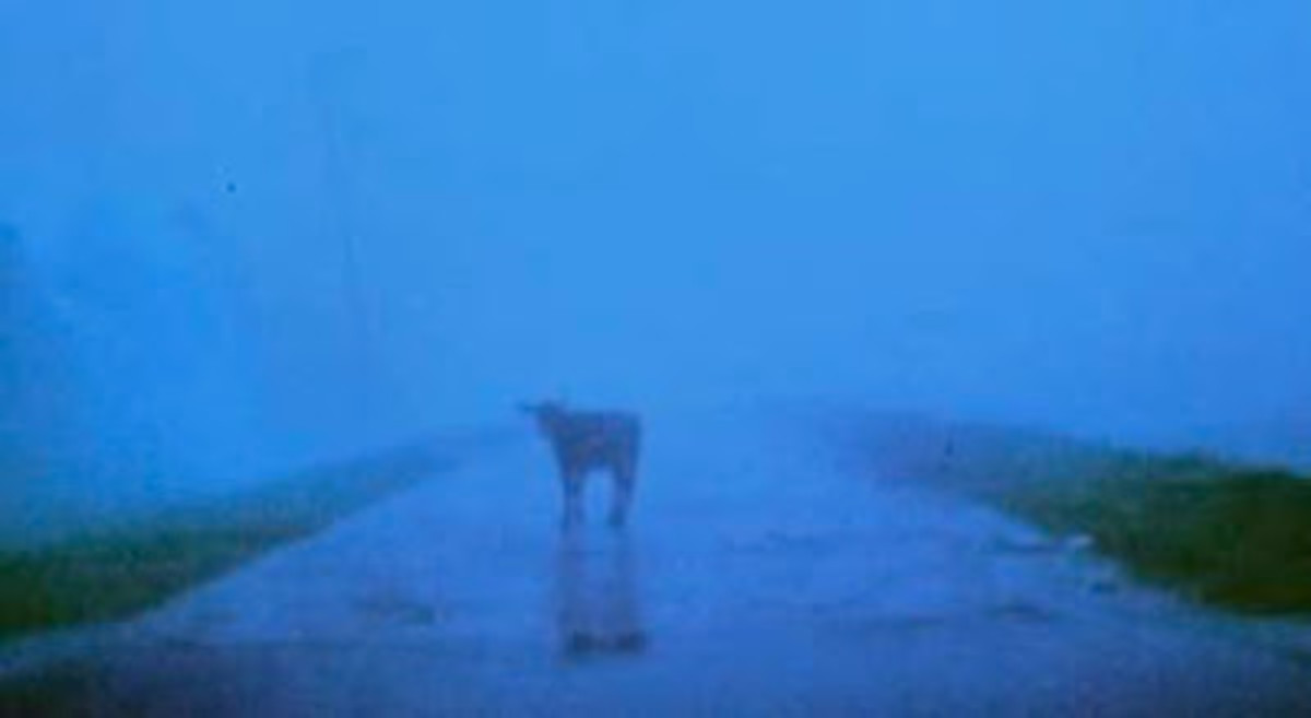 There are plenty of surreal images added during murder scenes in the 1998 film, such as this one.