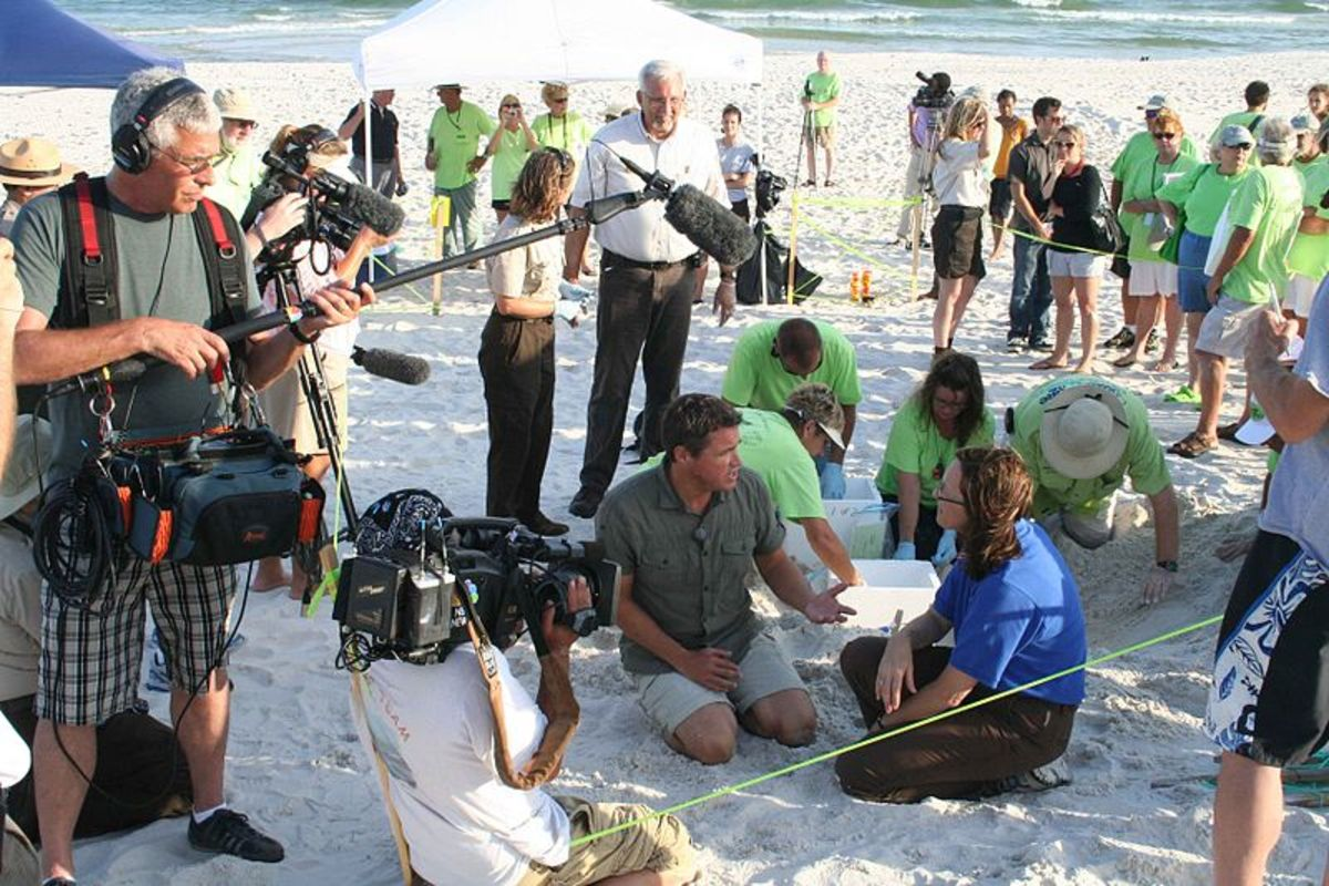Filming of a documentary about sea turtles with the U.S. Fish and Wildlife Service.