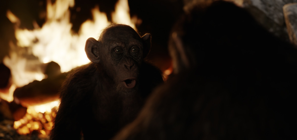 "Steve Zahn stars as Bad Ape in ""War for the Planet of the Apes."""
