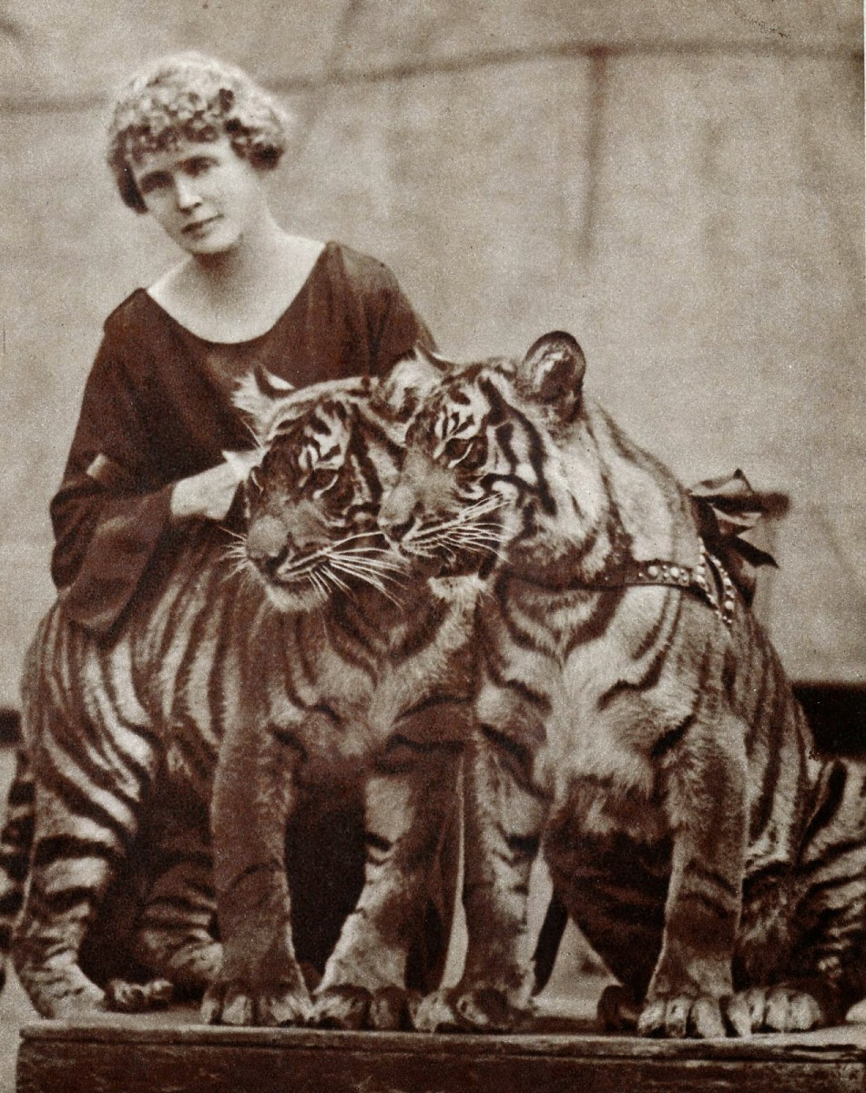 Mabel, with tigers 'Boston' and 'Beauty""