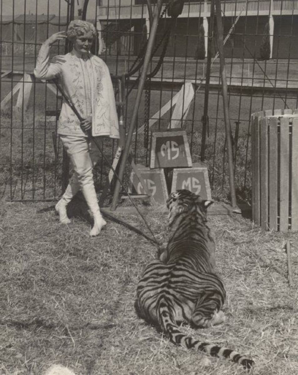 why-circus-fans-and-historians-should-see-this-documentary-mabel-mabel-tiger-trainer