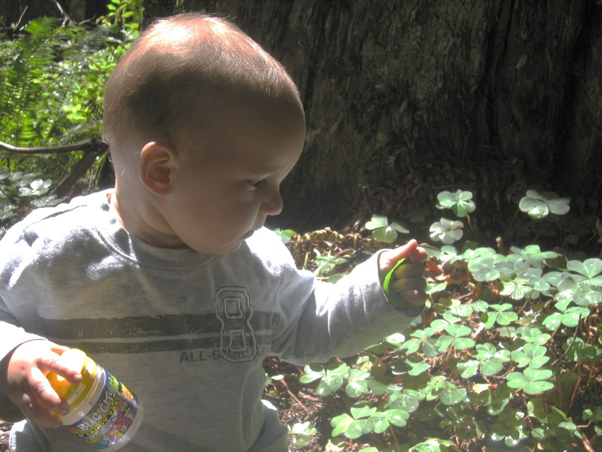 My infant son examining the shamrocks. All of the plants and wildlife are protected.
