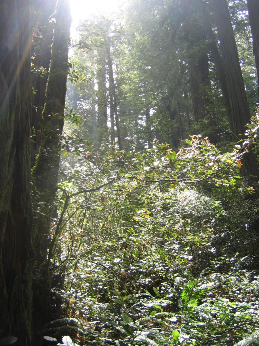 ladybird-johnson-grove