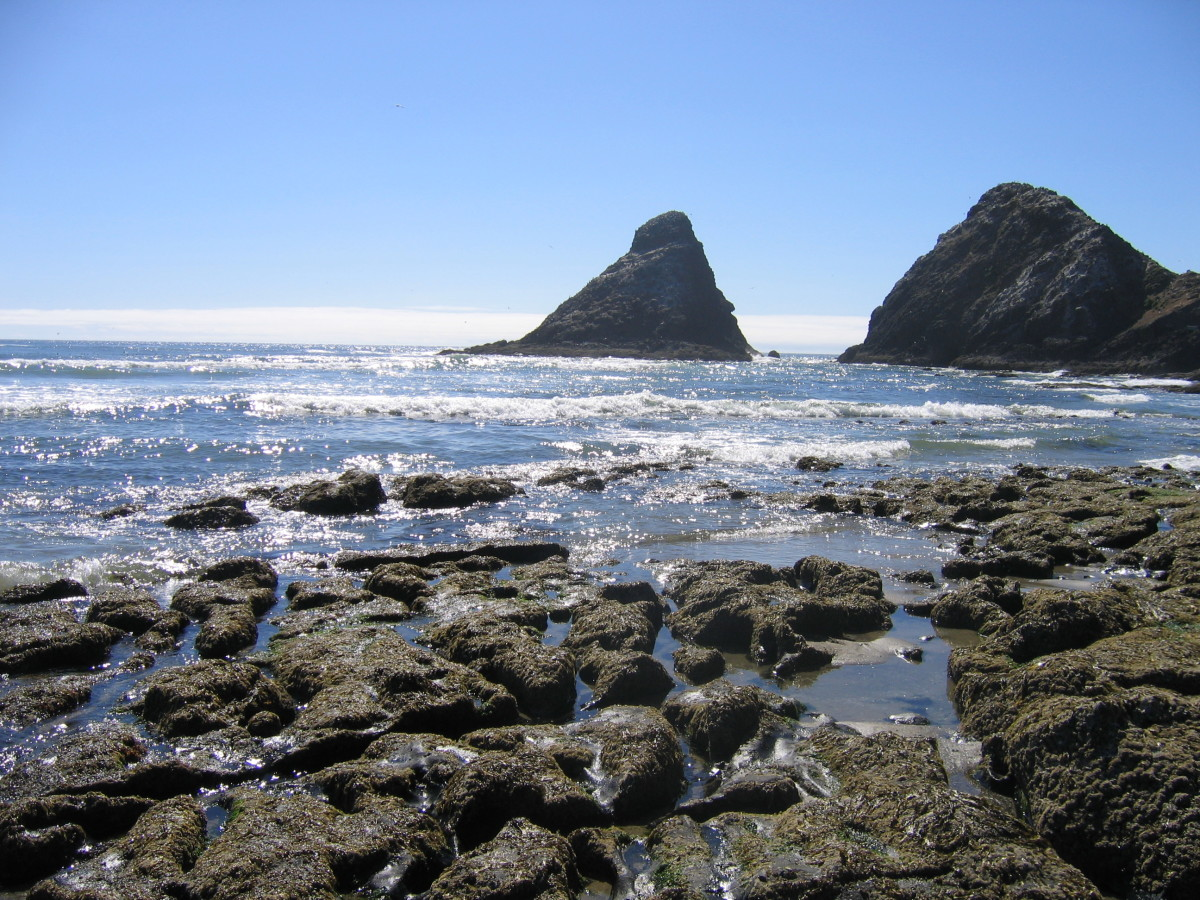 At low tide these rocks revealed sea animones, urchins, and starfish.