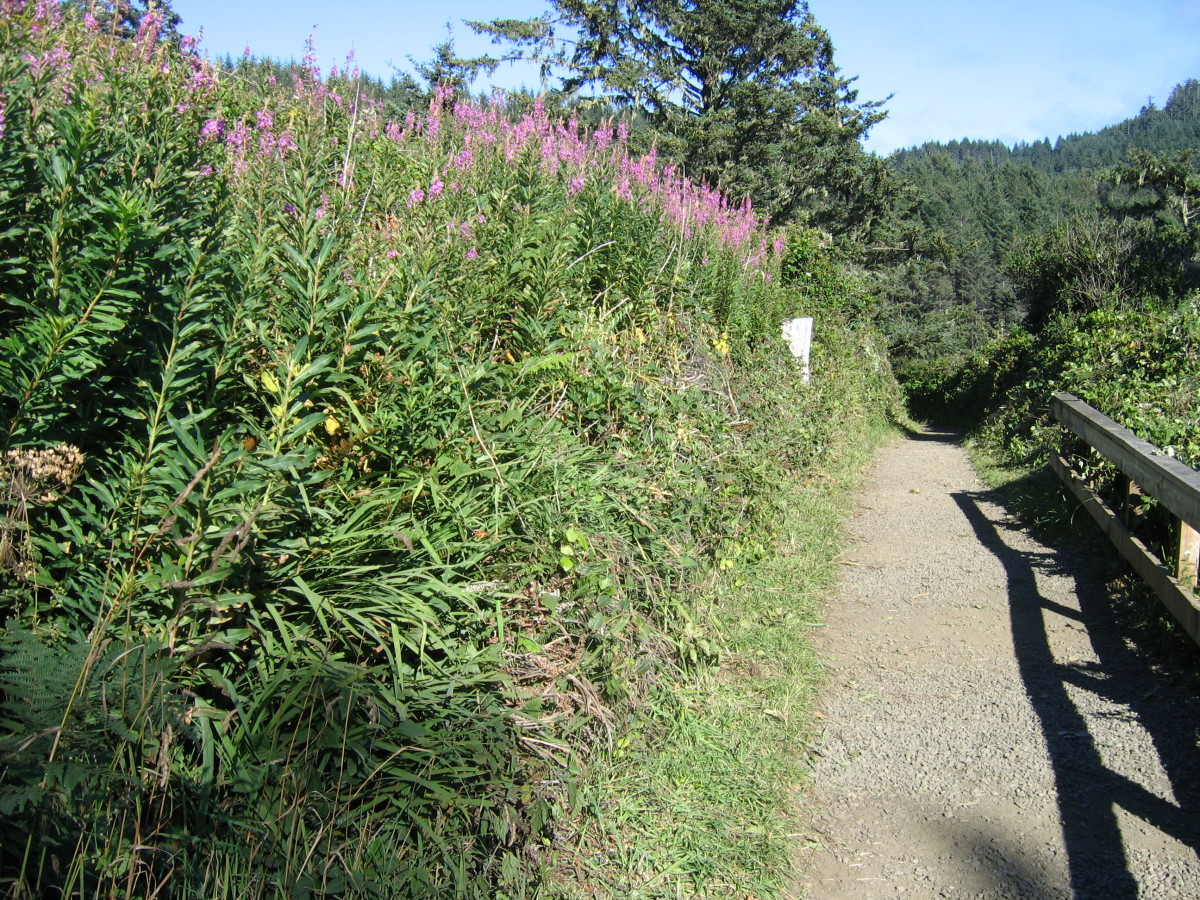The path to the lighthouse is lined with flowering vegetation, and spectacular views of the coastline--a perfect vantage point for photographers.