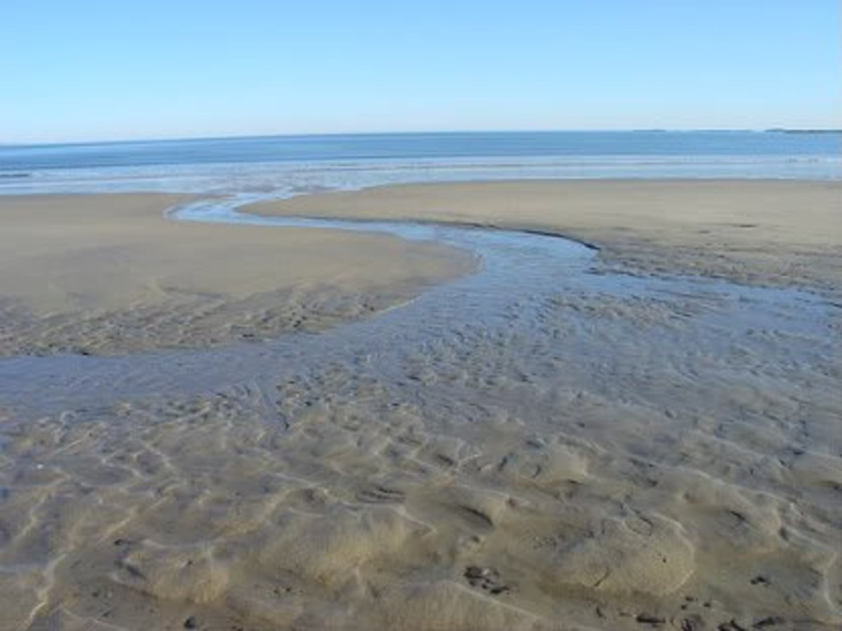 Check out the area at low tide, return at high tide.