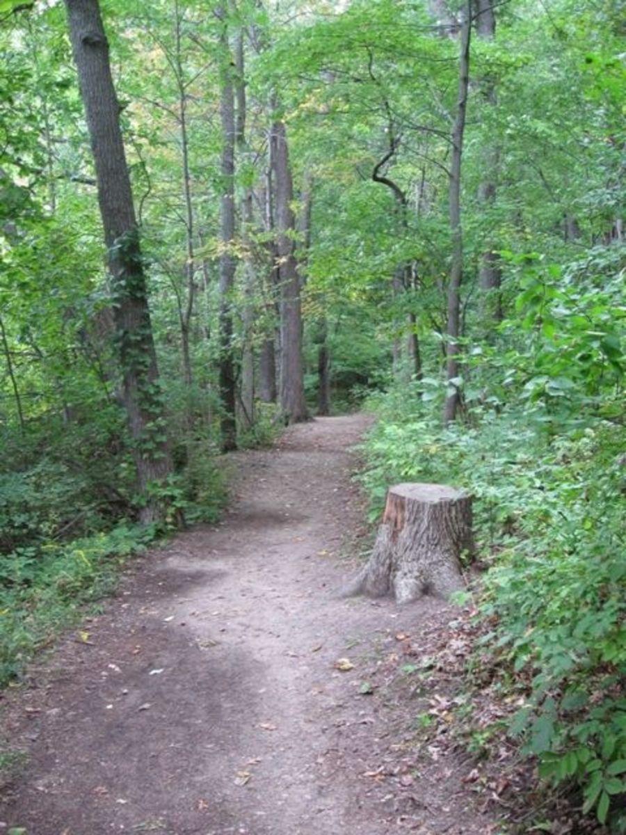 Along Trail 1