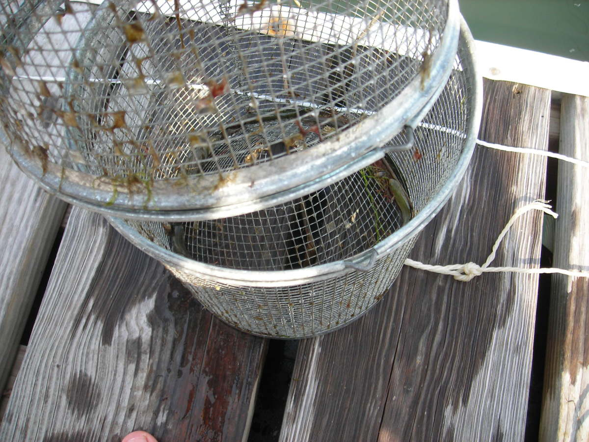 how-to-open-and-close-a-minnow-trap-for-catching-minnows