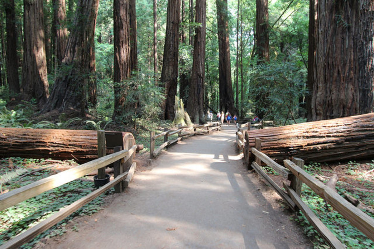 This is a typical trail in Muir Woods National Monument.  It looks similar to the area where we emerged after our little misadventure.