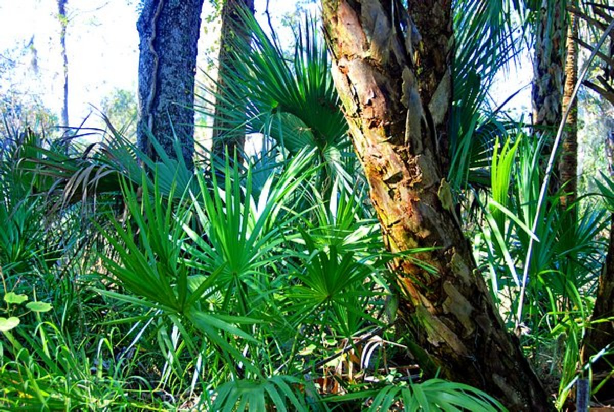 A good example of the local tropical shrubbery.