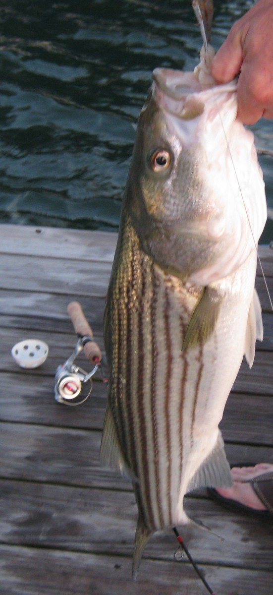 This big bass lived to fight another day