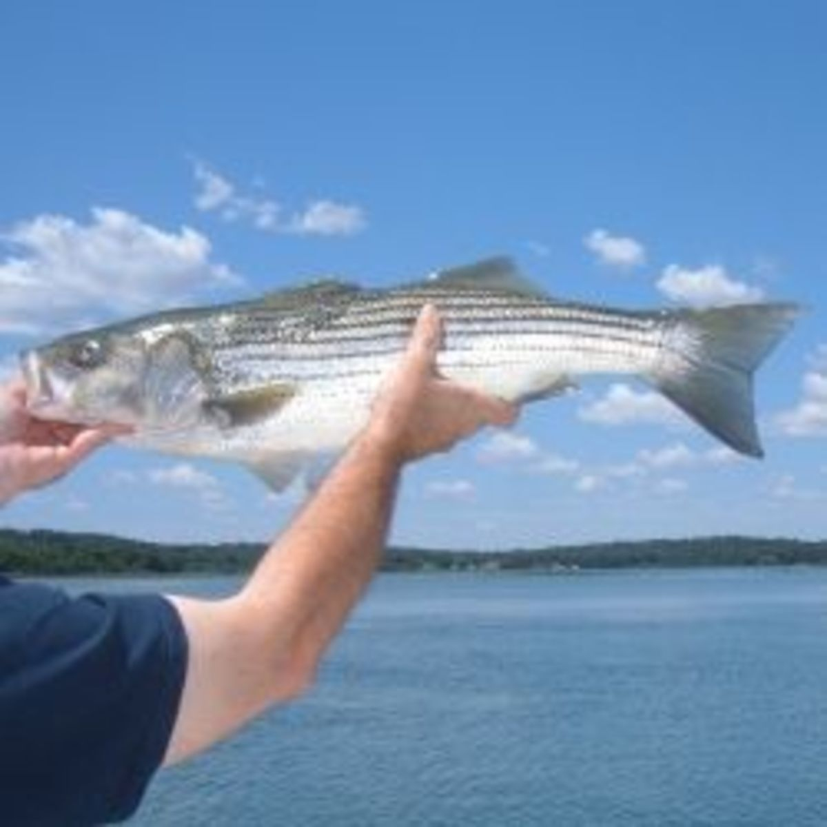 Eve small stripers are fun to catch!