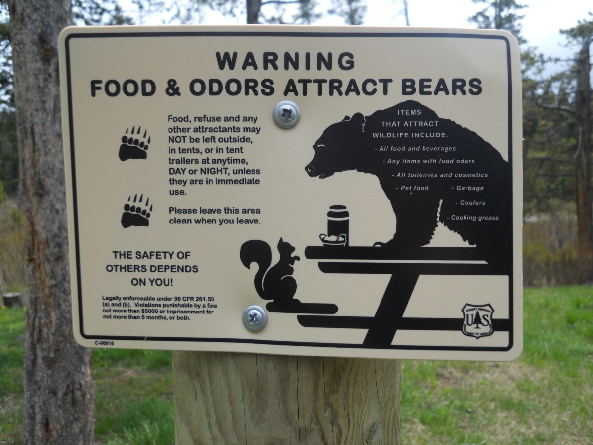 Take Precautions when Camping in Bear Country