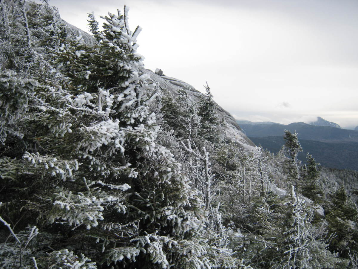 As you near the summit, these conifers become an impenetrable mass of branches.  I fund myself crawling underneath them until I could get to rock again.