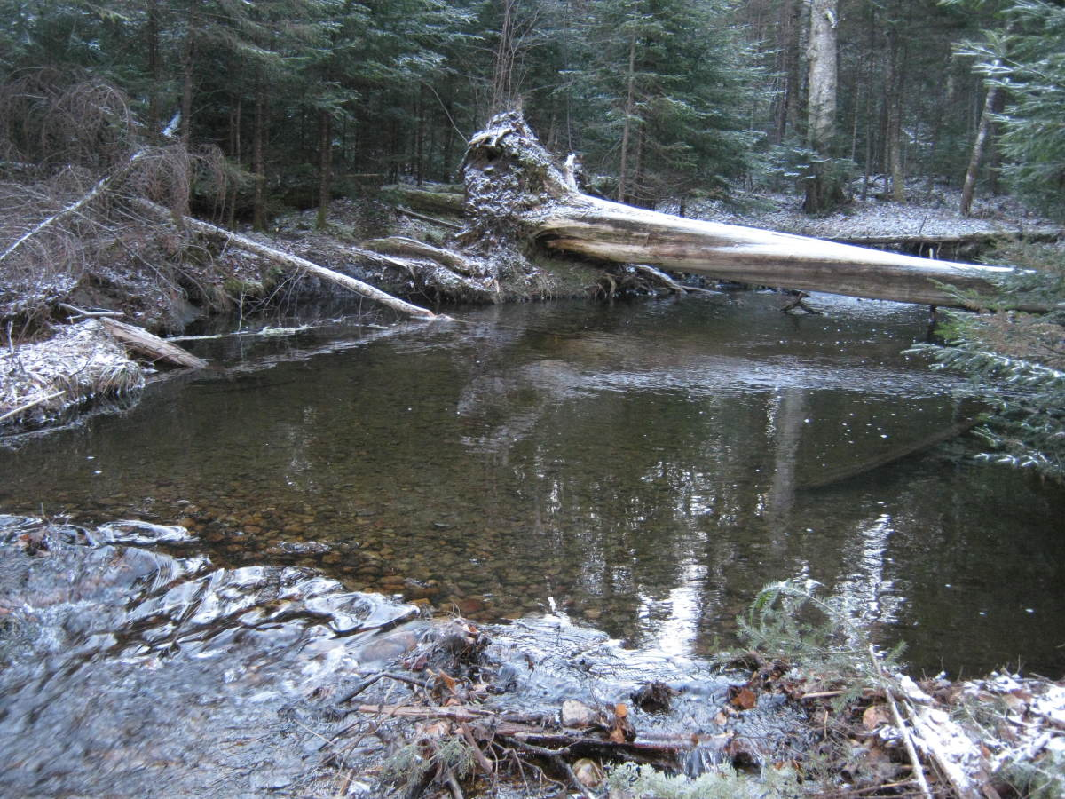 At the second creek crossing you have the option of crawling over the log or rock hopping.