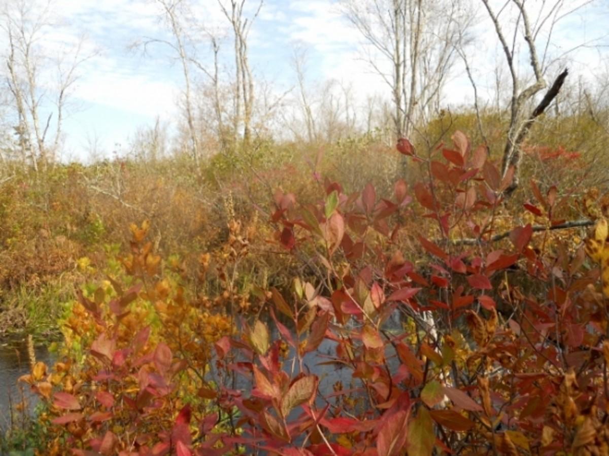 Nice bright Autumn shrubs