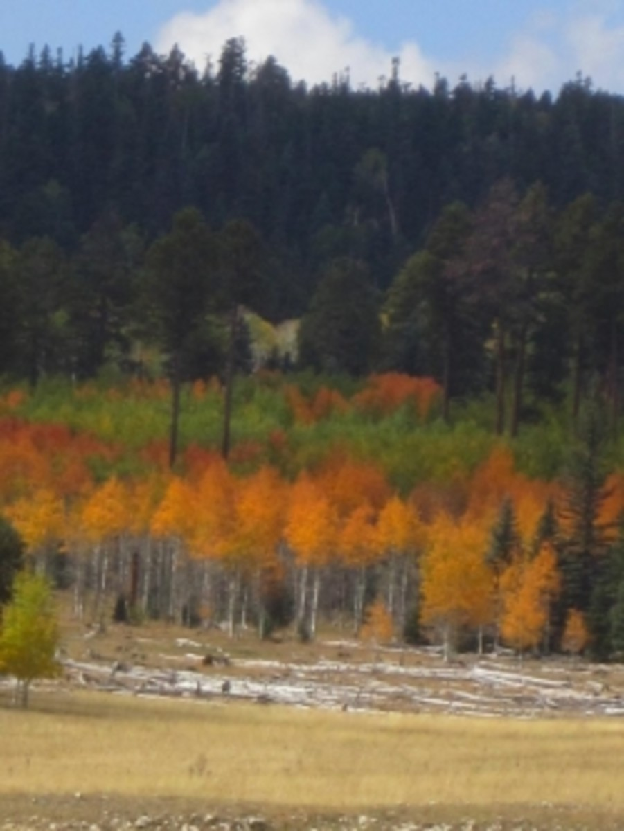 Fall colors on the North Rim