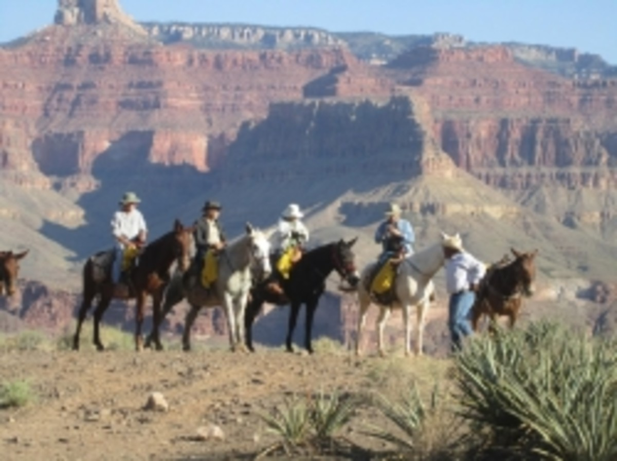 Riding mules in Grand Canyon