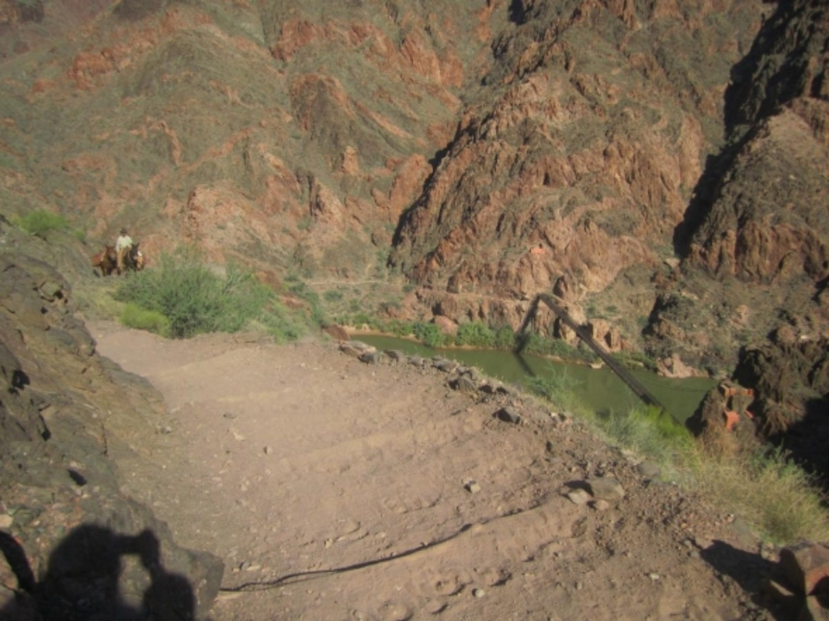 Mules coming up the South Kaibab Trail, Grand Canyon