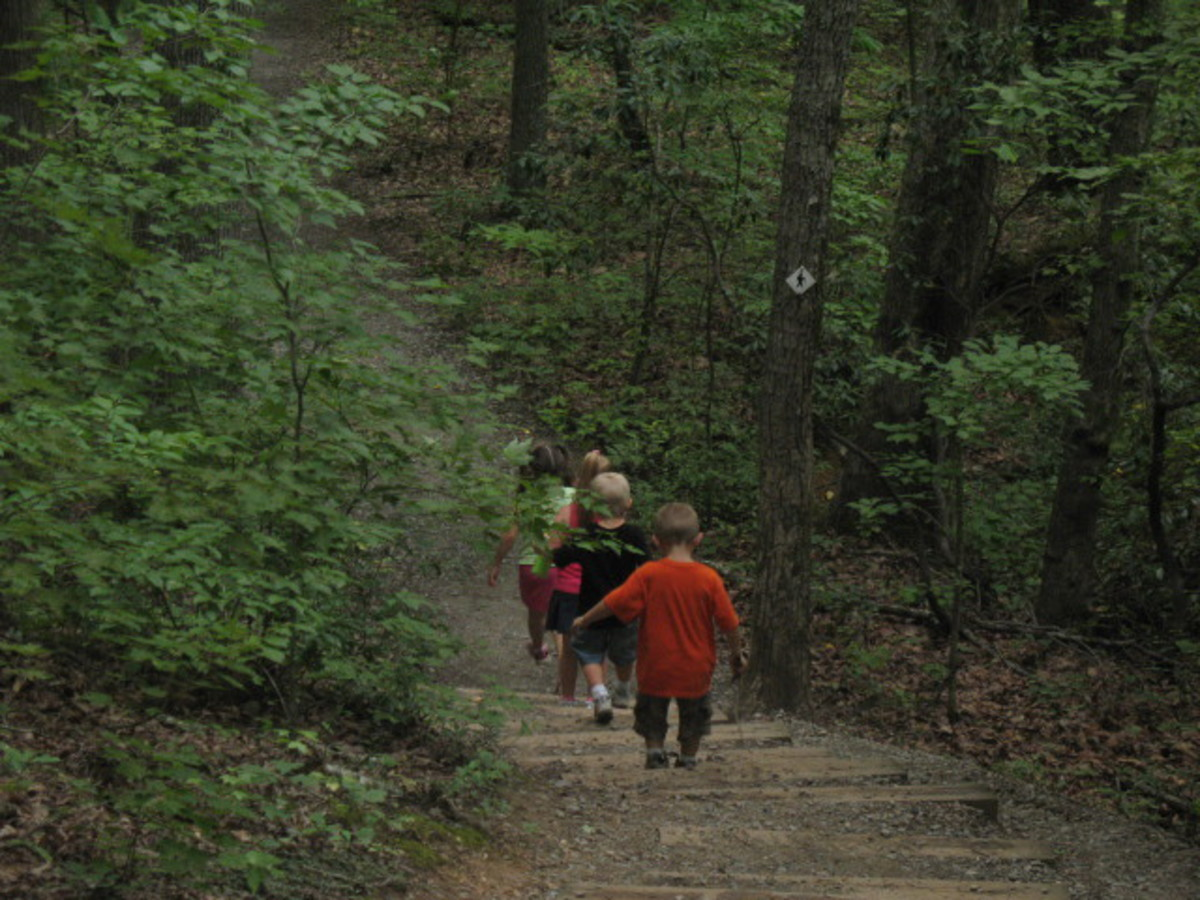 Some hiking trails include man-made stairways, bridges, and other obstacles.