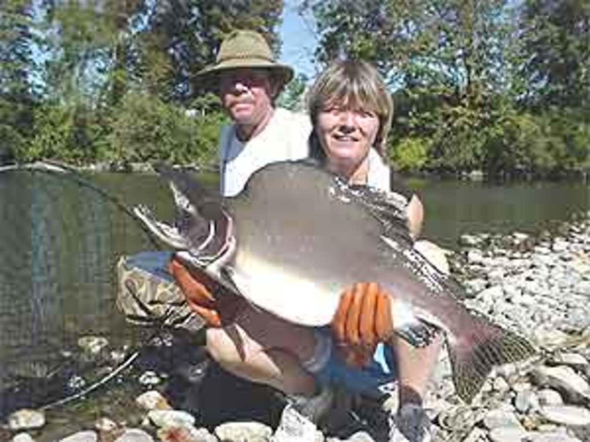 World Record Humpy (Pink Salmon)