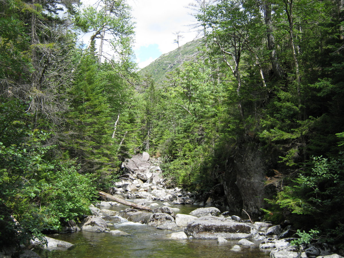 Marcy Brook at the bottom of Panther Gorge.