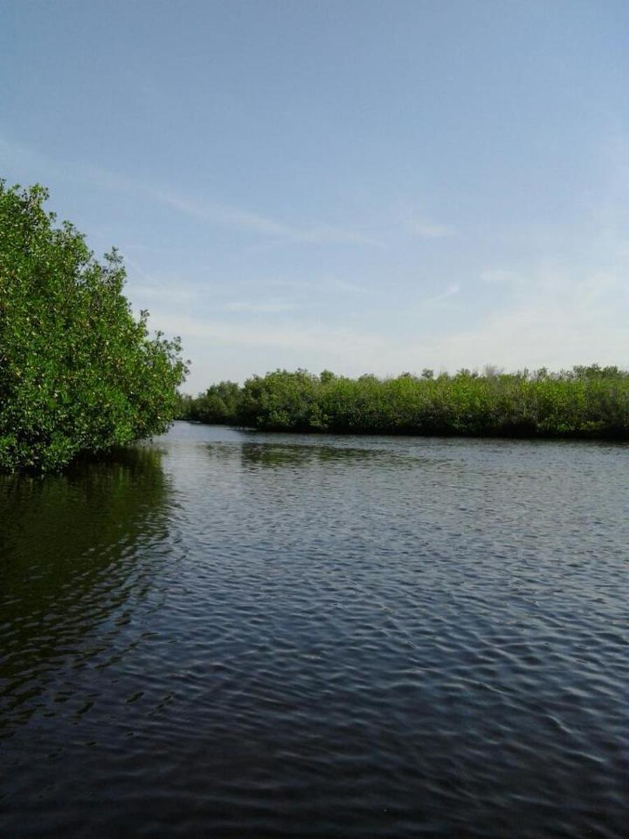 An offshoot trail at Upper Tampa Bay Park