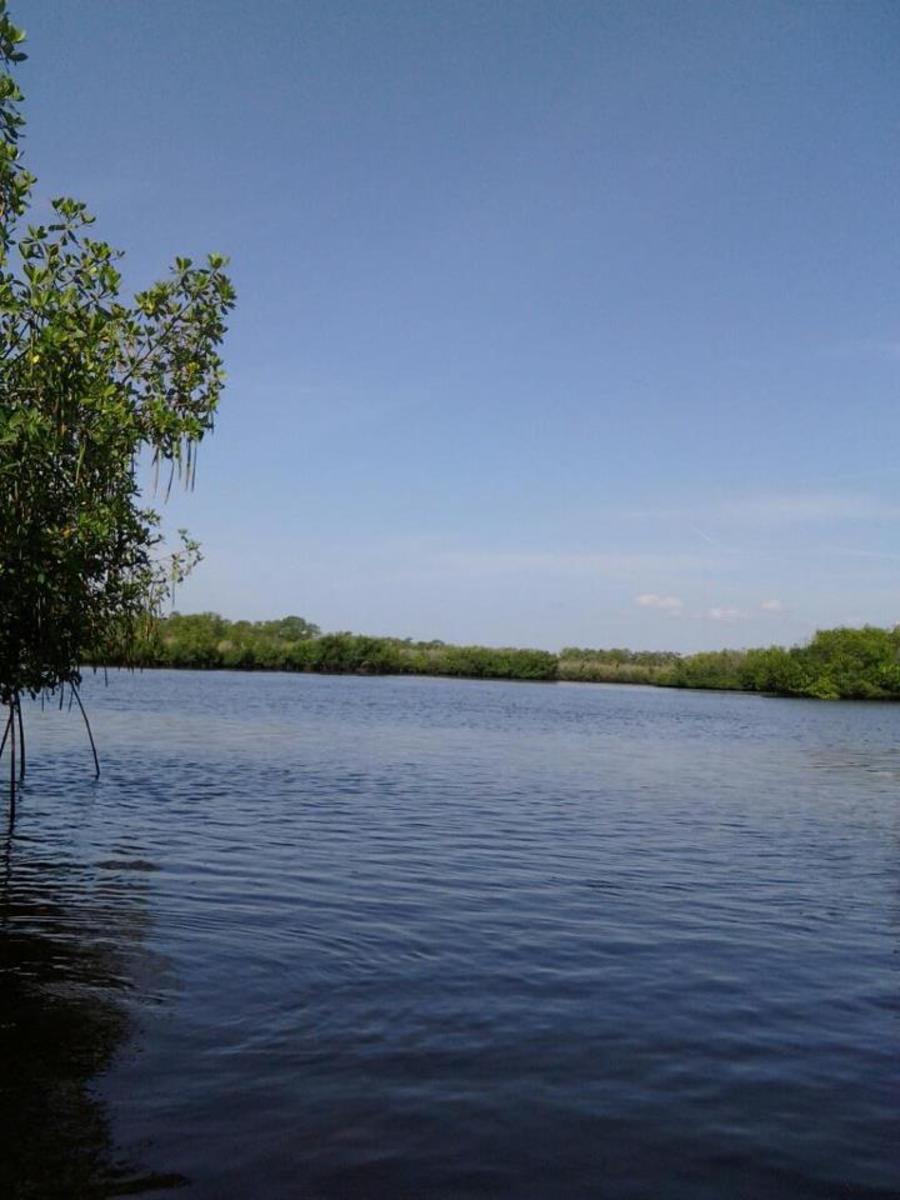 The main trail at Upper Tampa Bay Park