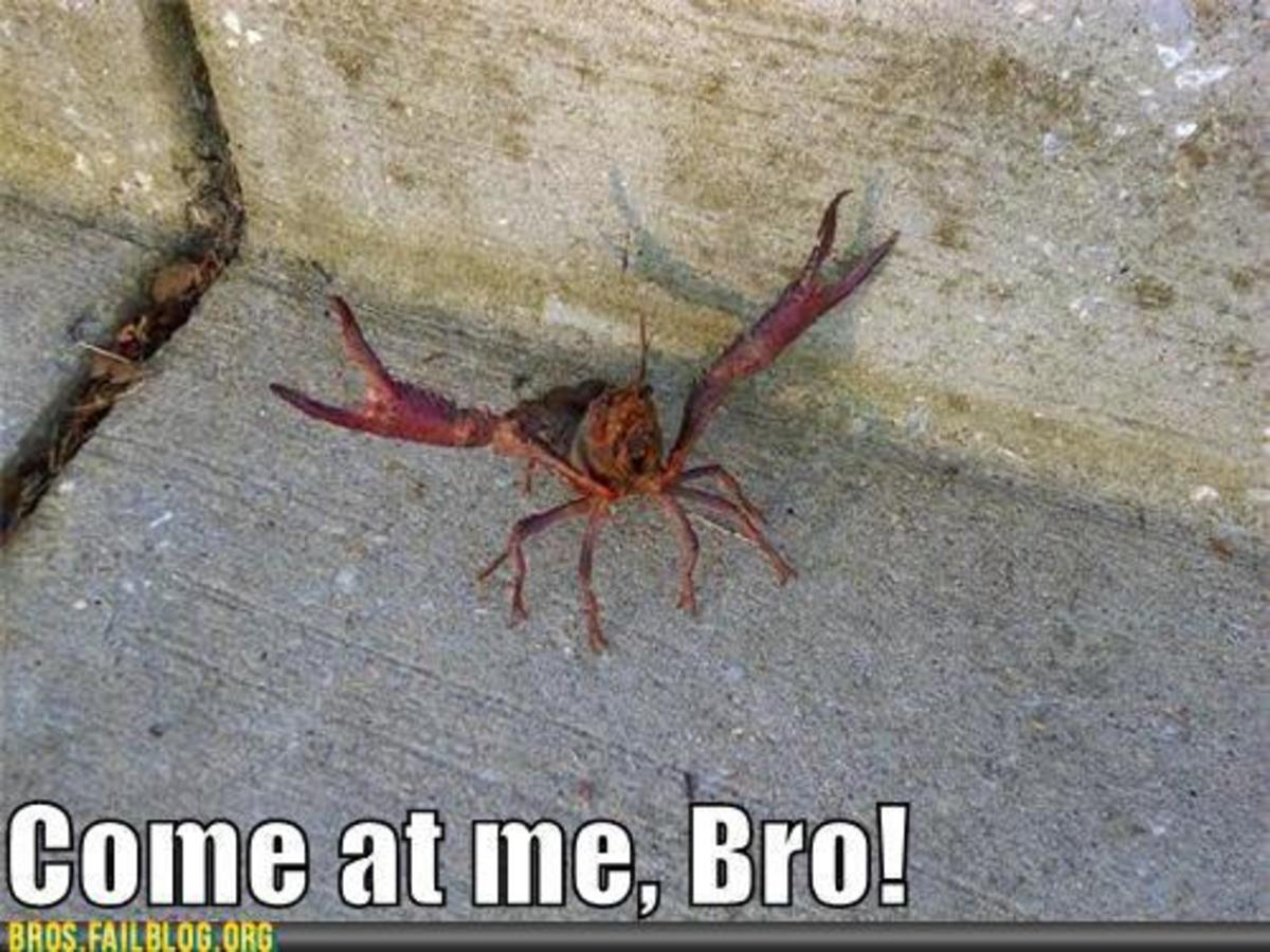 What I think every time a crawdad raises his claws up.