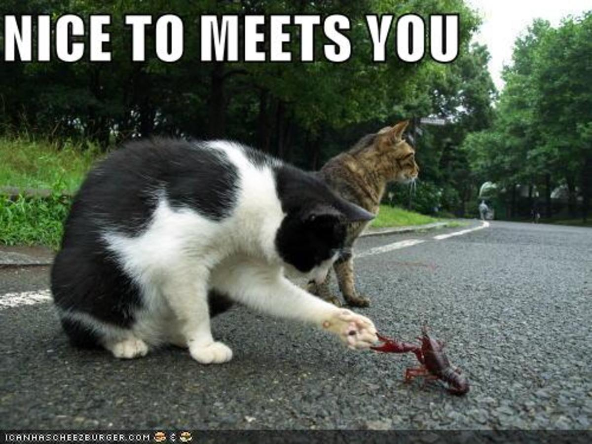 Kitty meeting crawdad :3