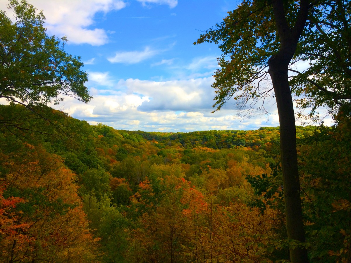 Overlooking Tinker's Creek Gorge in all its autumnal glory.