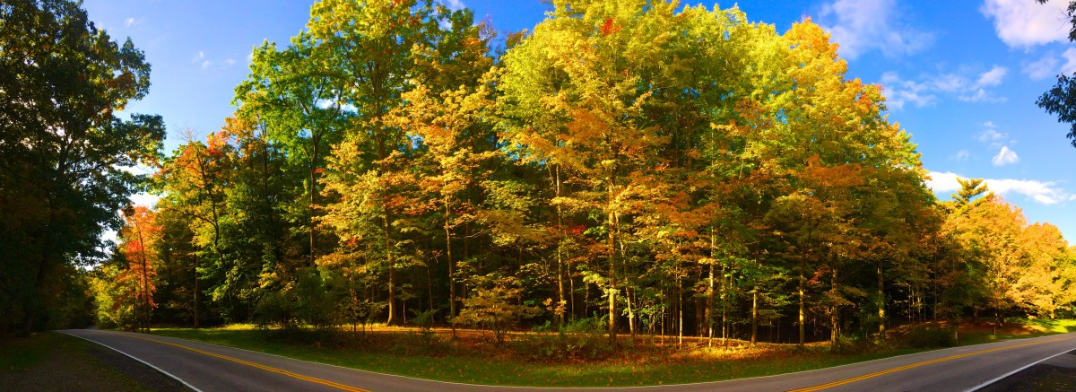 A drive down Tinker's Creek Road will have you fall-ing over with views of the changing leaves.