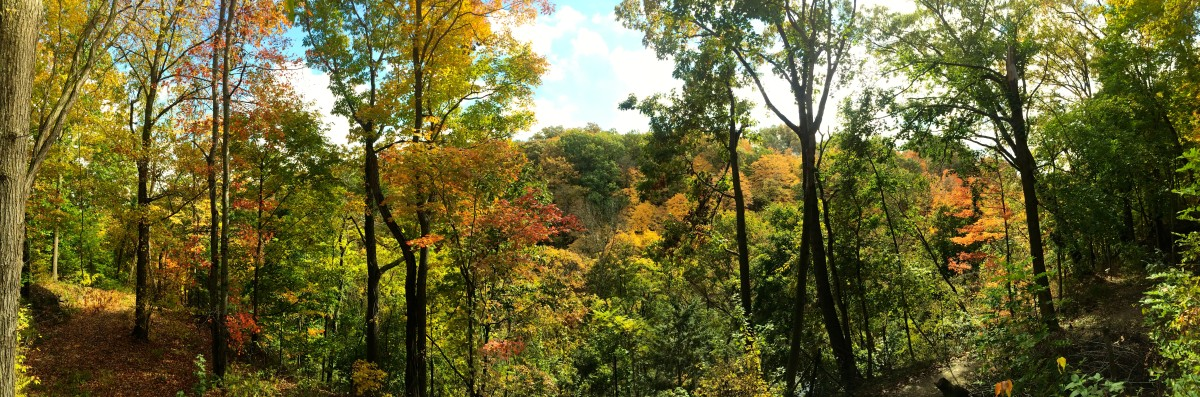 A lovely view of the fall foliage along a trail bordering the Fellows Riverside Gardens.