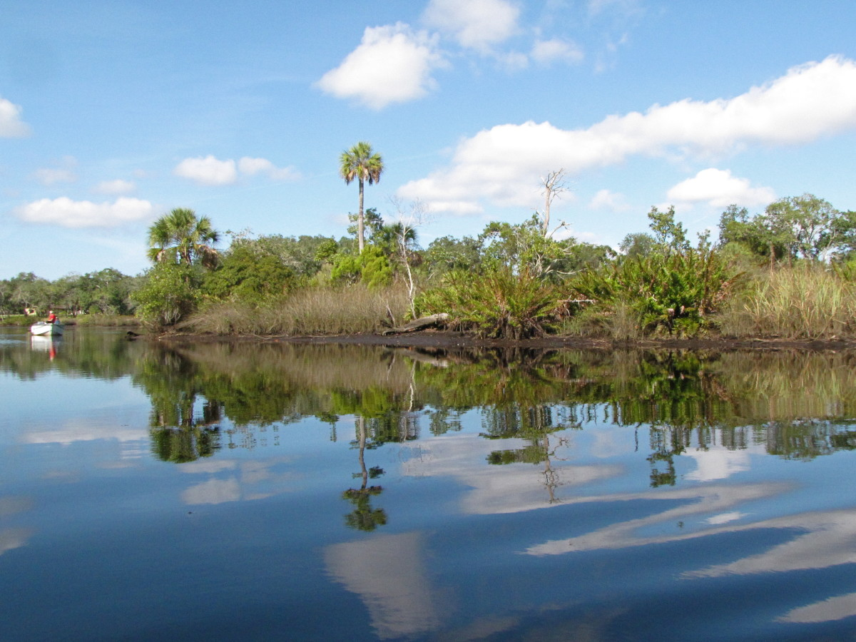 kayaking-the-cotee-river-in-the-james-e-grey-preserve