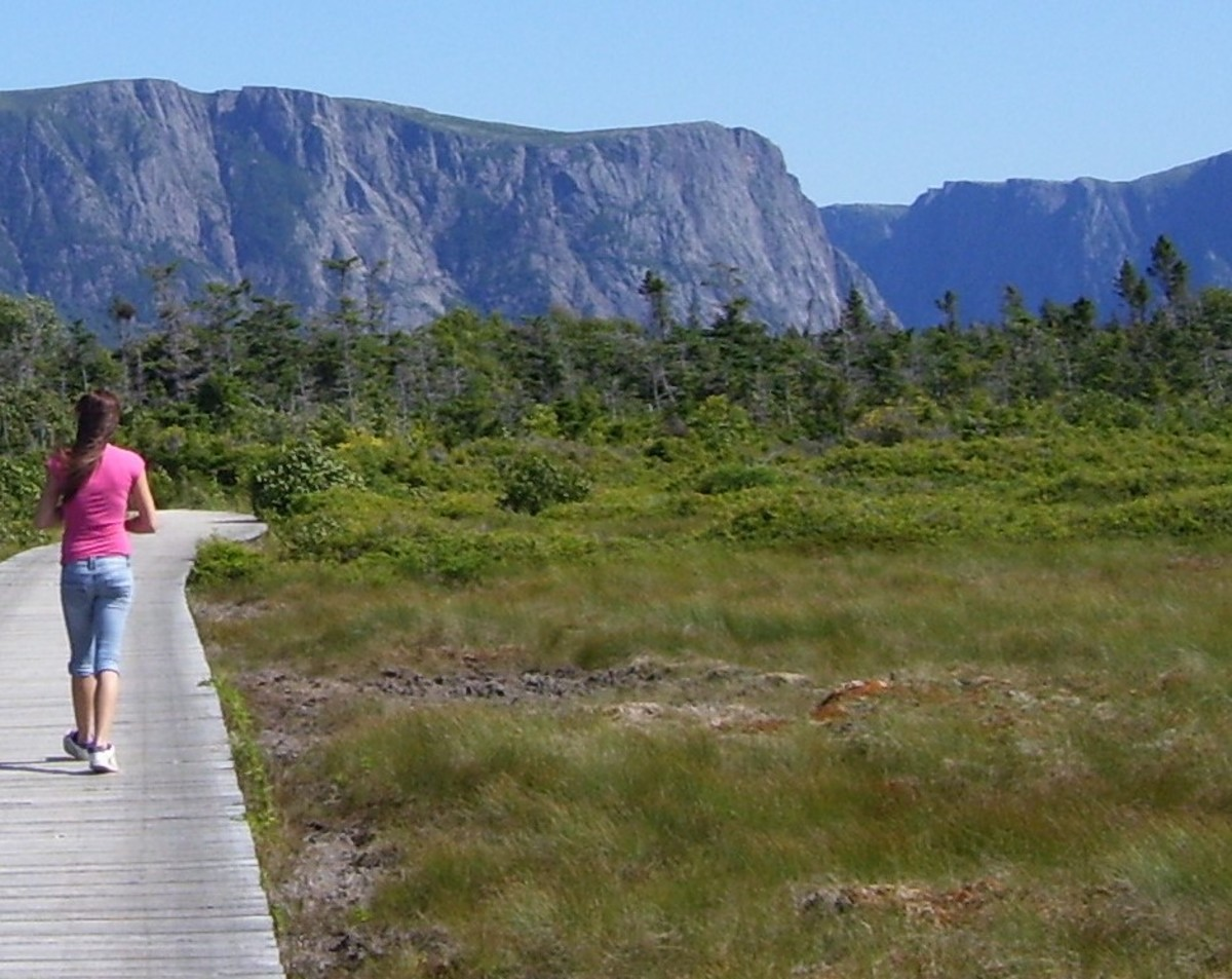 Boardwalk on the Western Brook Pond trail.