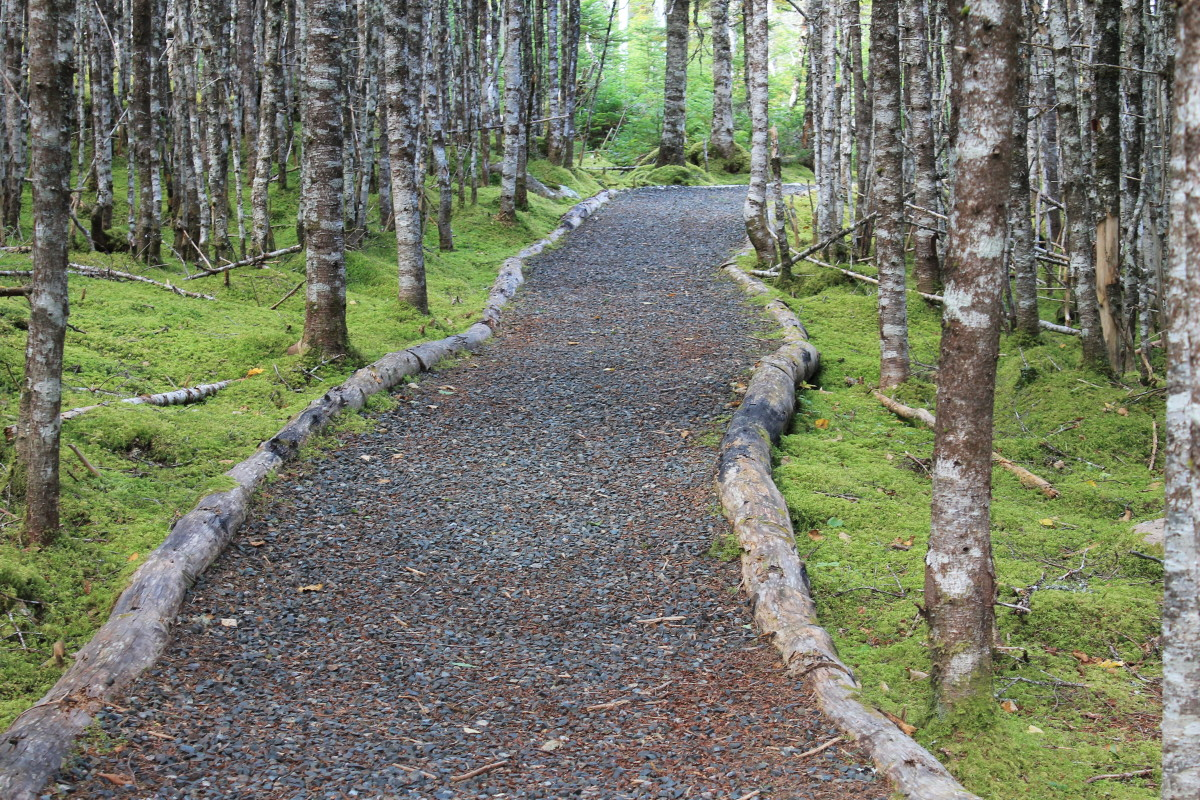A section of walking trail at Father Duffy's Well provincial park, Salmonier.