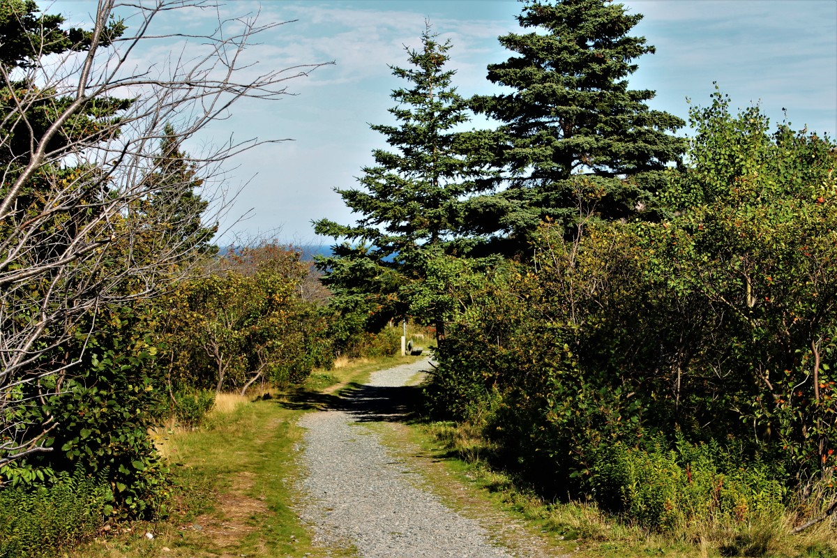 A Tree Lined Section of the Burma Road Trail, Looking Down Toward Quidi Vidi Village