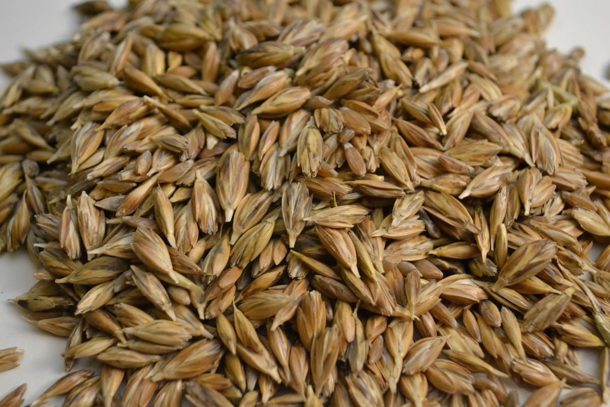 Wheat is a very valuable item for long term food storage. It can be used for pie crusts, breakfast food and making biscuits. Once milled the bran can be a beneficial livestock feed.