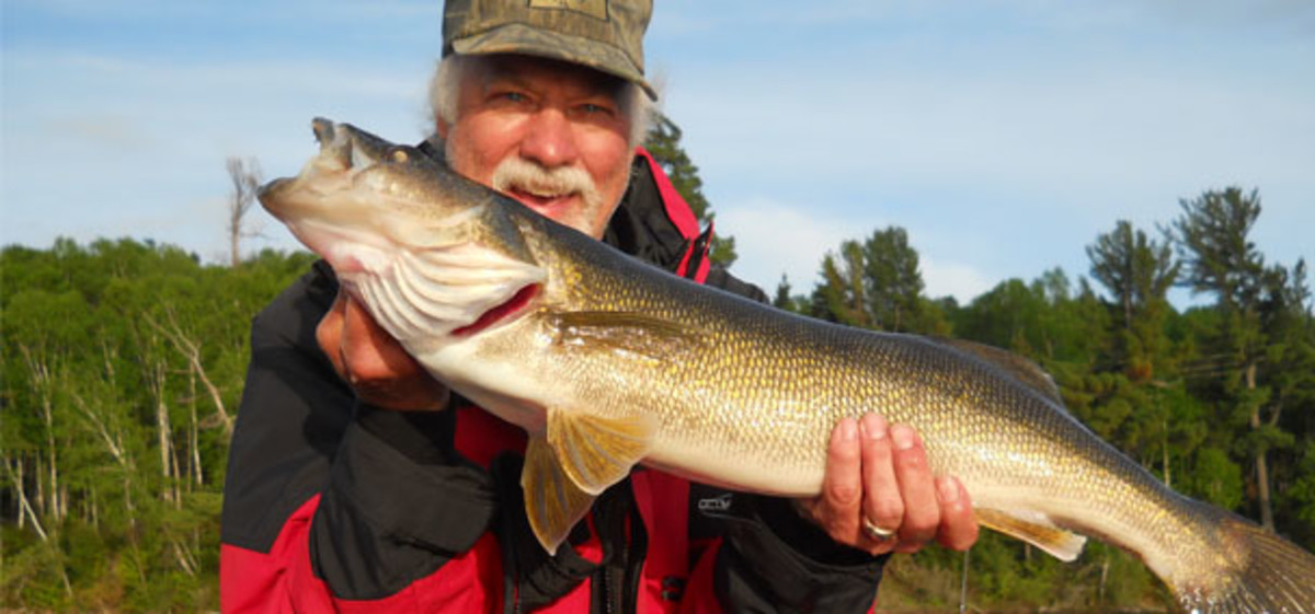 Walleye, like this lunker, can be incredibly picky biters. Taking the lure directly to the fish will give you the best chance for bites.