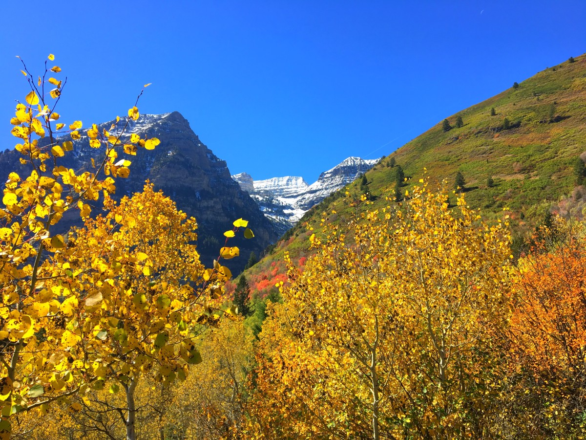 Another shot of Timpanogos, this time framed in yellow