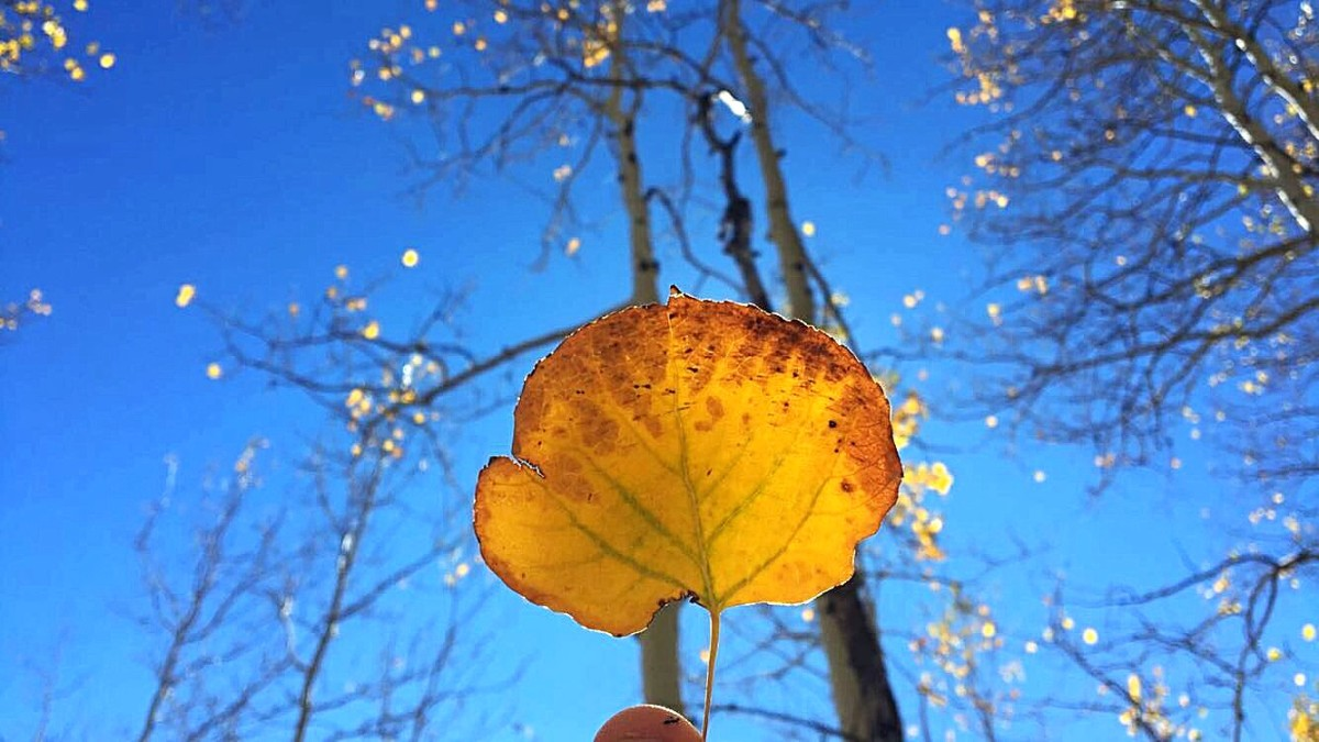 Orange leaf meets blue sky