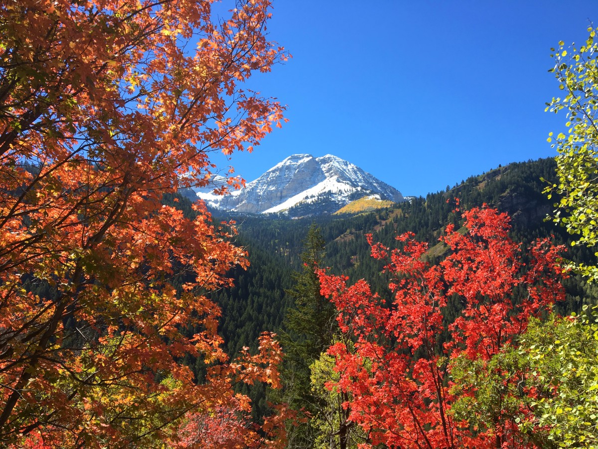 Timpanogos popping up behind a valley of brightly-colored trees