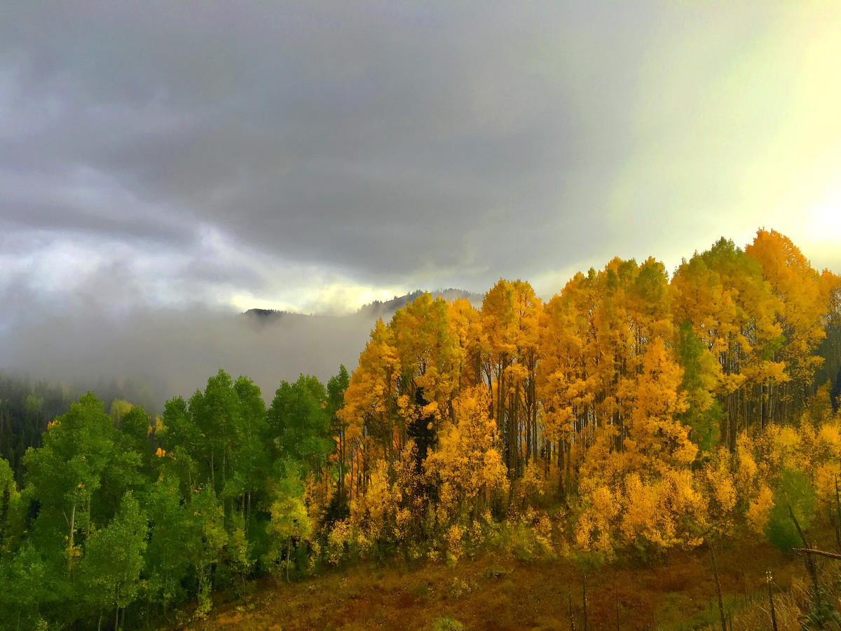 The perfect mix of green and yellow on Guardsman Pass