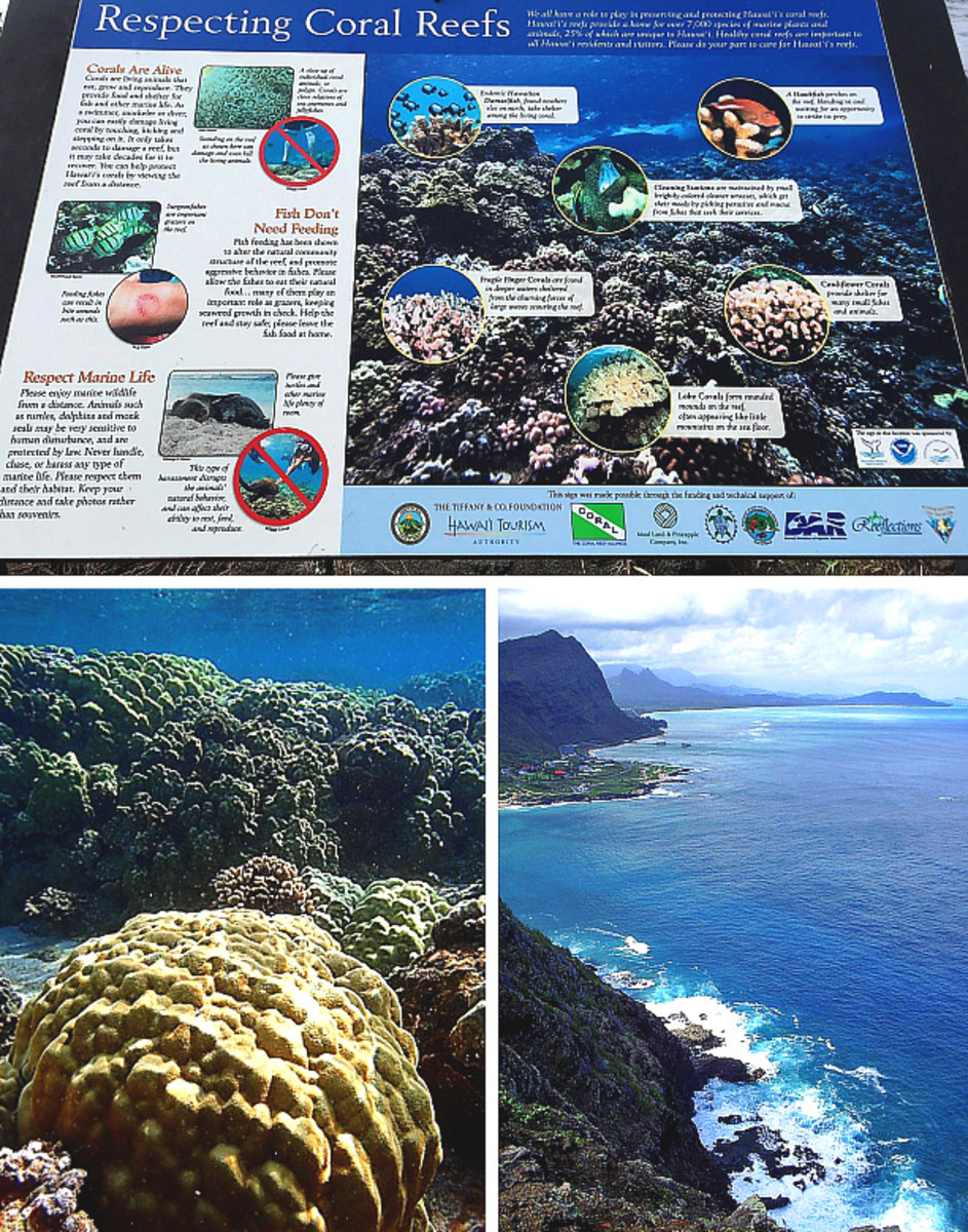 "Top: ""Respecting Coral Reefs"" sign at Kapoho Tide Pools. Bottom left: Hawaii's underwater landscape. Bottom right: Above water landscape (Oahu's coastline)."