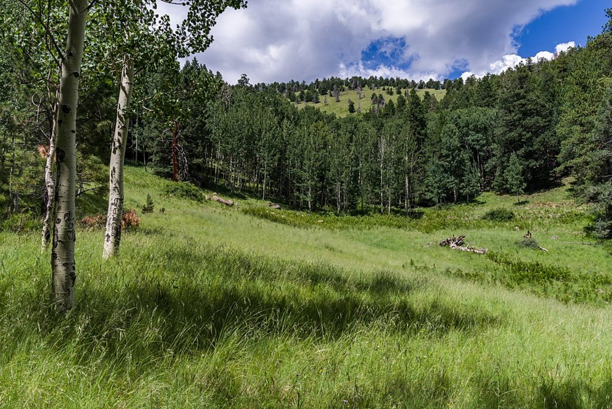hiking-the-weatherford-trail-in-flagstaff-arizona