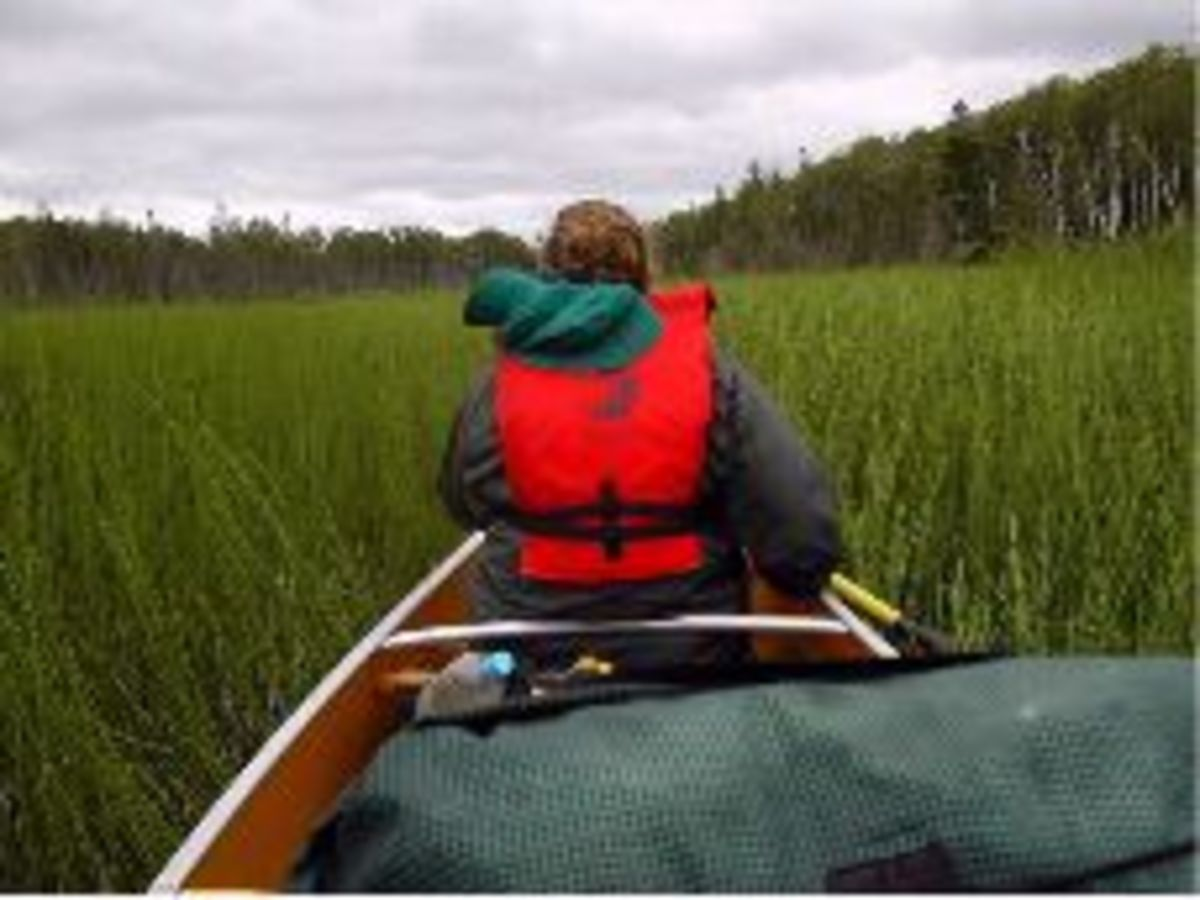 Searching for the channel in reed-filled Royal Lake