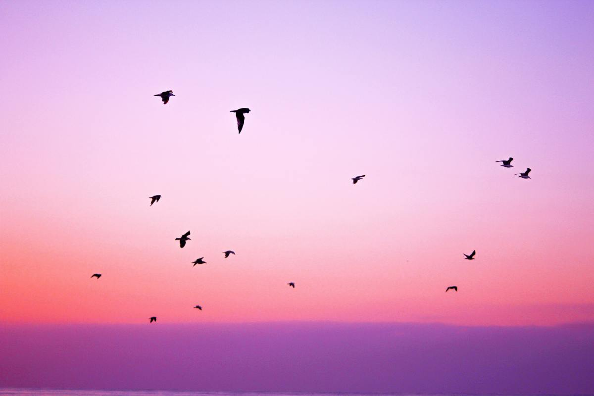 Birds flying in the sky during sunrise.