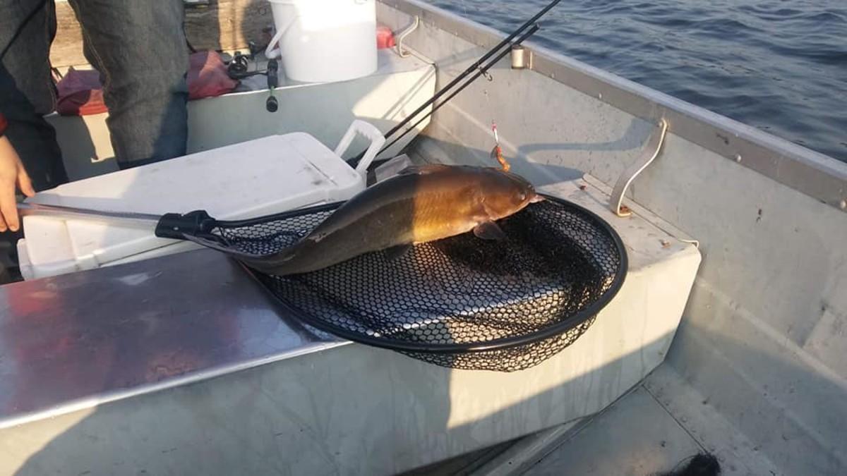A fine specimen caught on NE Ohio reservoir by a novice angler.