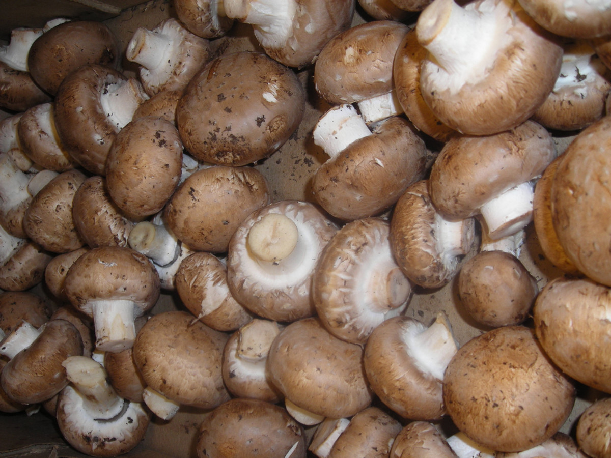 Cremimi mushrooms
